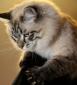 Аватар пользователя marshrut-moskva